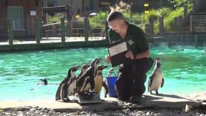 Bauch einziehen! Jährliches Wiegen im Londoner Zoo