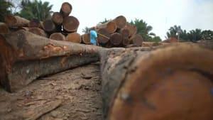 Wegen Waldbränden: Widerstand in EU gegen Mercosur-Abkommen wächst