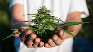 Quebecers Can Now Grow Cannabis At Home