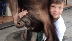 Boy and orangutan become best friends