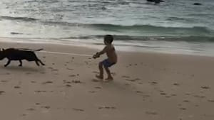 Kid gets dragged on beach by dog's leash