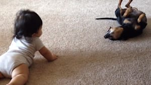 Dog's first interaction with baby is priceless