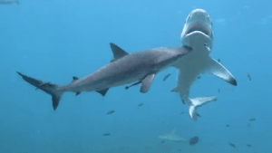 Did these sharks just become best friends?!
