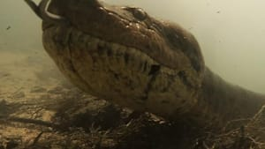 Scuba diver comes face-to-face with a giant snake