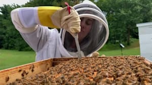 Veterans take up beekeeping for mental health