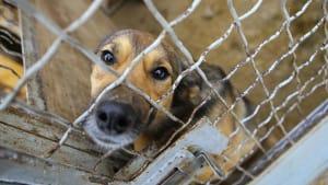 Adoption: So bereitest du dich auf den Besuch im Tierheim am besten vor