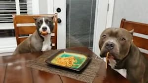 Dogs act innocent after getting caught eating food