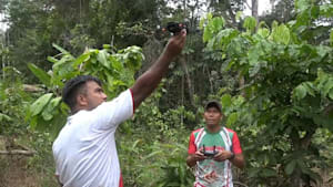 Amazonas: So kämpft der Tikuna-Stamm gegen Brandstifter