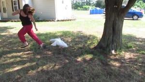 Attack of the killer ducks
