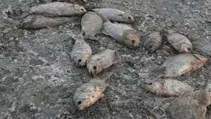 Griechenland: Fischsterben am Koroneia-See