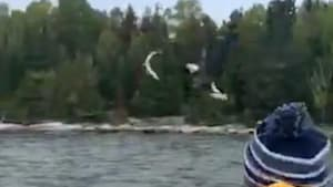 Incredible moment a boy tosses a fish to an eagle