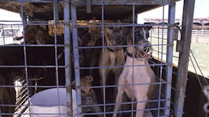 Animal Hoarding: Das Messie-Syndrom, dem 3.000 Tiere jährlich zum Opfer fallen