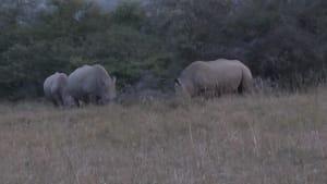 Heute ist World Rhino Day