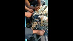 Fishermen rescue sea turtle in loose fishing nets