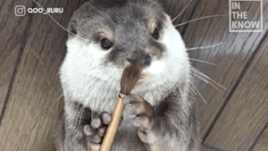 Meet Krull, an indoor otter