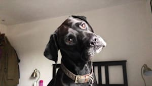 Curious dog pulls off extremely cute head tilt