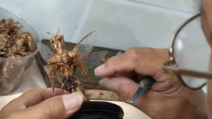 Artist creates sculptures using cicada shells