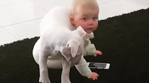 Puppy adorably climbs onto baby's shoulders
