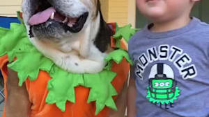 Dog dressed as pumpkin gets a kiss from little kid