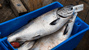 Canada's Seafood Fraud Problem