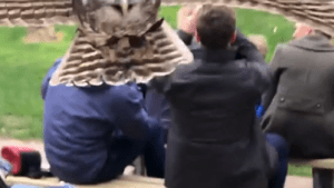 Man captured the moment he was attacked by an owl