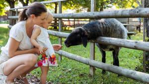 """TV: In """"Meat the Family"""" sollen Familien Vegetarier werden oder sie müssen ihr eigenes Tier essen"""