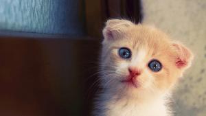 Katze: Täglich habe ich das gemacht und ihr damit unbewusst das Herz gebrochen