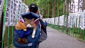 Rescue kittens that travel Japan with their owner