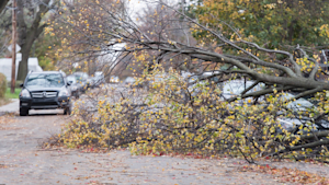 Wild Weather Leaves Nearly 1 Million Without Power In Quebec