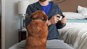 Dog does not want her owner to play video games