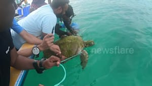 Divers rescue sea turtle trapped in fishing lines