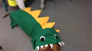 Dog poses while dressed as dragon