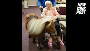 Therapy pony gives wheelchair-bound grandma a ride