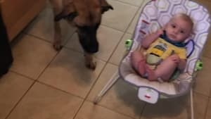 Dog tries to protect baby from vacuum cleaner
