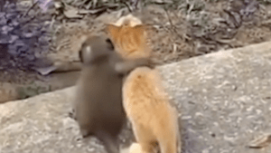 Watch this monkey put its arm around a kitten