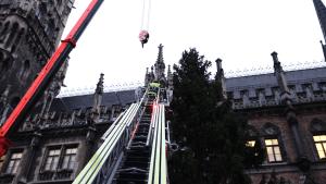 München hat seinen Weihnachtsbaum 2019