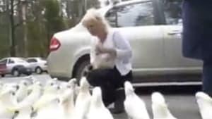 Sie denkt, sie füttert Tauben: Dann kommt die Überraschung