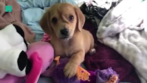 'Unicorn' puppy is melting hearts everywhere