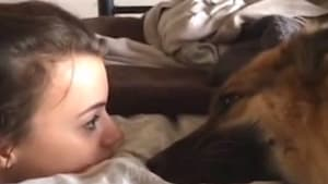 German Shepherd whines to owner