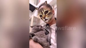 Cats give funny reactions to feline photo filter