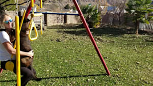 Dog enjoys swinging with owner