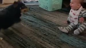 Dog jumps around, makes baby laugh hysterically