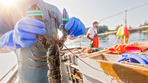 #DumpingDay Marks The Start Of Lobster Season In Nova Scotia