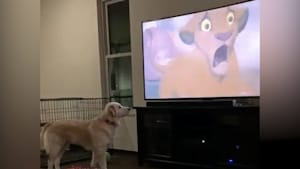 Dog is adorably concerned by 'The Lion King'
