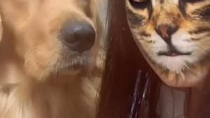 Dogs are so confused by Tik-Tok's cat filter