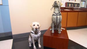 Sully the service dog honored with statue
