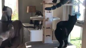 Cat gang gets together for singing toy birds