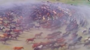 Watch hundreds of horses galloping in a spiral