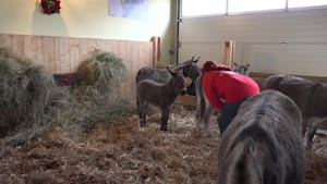 Weiteres Eselbaby auf Gut Aiderbichl Ranch geboren!