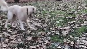 Dog has cute reaction when introduced to hedgehog